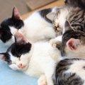 猫の多頭飼いってどうなの?注意点などを解説!