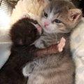 子猫が子猫を抱きしめる姿が話題に!その子はハードな過去を持っていた…