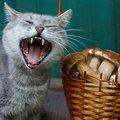 猫も注意したい「秋バテ」とは?症状や予防できる事をご紹介!