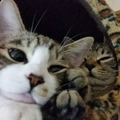 飼いやすい猫のポイントとオススメ4品種