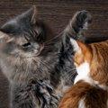 猫同士が喧嘩になる6つの原因