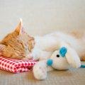 羊毛フェルトによる猫のぬいぐるみと自作の方法