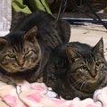 子猫が起こした奇跡…先住猫の孤独を癒した愛の実話