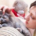 猫にしこりがある時に考えられる病気とは