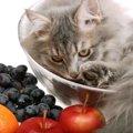 猫にレーズンを食べさせてはいけない理由と対処法
