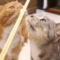 「あ、あれは!!」割り箸をみた猫達それぞれの反応の違い