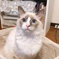 飼い主の顔を狙って噛む子猫のホンネとは?|LAYLAのペットリーディング