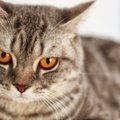 浮気、外出…隠していても猫にバレてること3つ