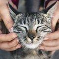猫の『耳が熱くなる』3つの原因と対処法