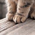 猫は右利き?左利き?自宅で実験してみた!