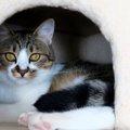 猫のハウスのおすすめ商品9選!選び方のポイントとは