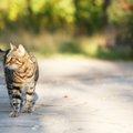 猫が迷子になった時の探し方や連絡する場所