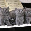 猫ちゃんに聴かせてあげたい音楽2選