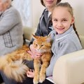 『社交スキルが高い猫』に共通する3つのポイント!人馴れしてもらうた…
