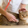 猫が一度かかると定期的な通院が必要になる病気4つ