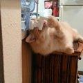 決定的瞬間!ウォーターサーバーの水泥棒猫
