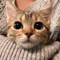 猫との愛をもっと深める方法5つ