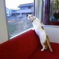 猫の殺処分ゼロを目指して 世界初の「ねこカフェ列車」運行!