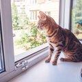 猫によくある『事件&事故』5選!飼い主がすべき予防策は?