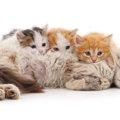 猫の授乳と子育てや人工哺乳の仕方について