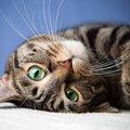 猫の『去勢·避妊手術』をして変わる3つの事