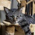 猫が『あご』を乗せてくるときの心理3選♡フェロモンと関係があった!