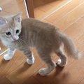 誰かいる!自分の他にもう一匹の猫を発見!