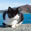 猫デザインのピアスが可愛すぎる!にゃんこ好きにはたまらないアクセ…