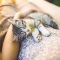 【新型コロナ】猫は無症状だが猫同士での感染があり得る|海外ニュース