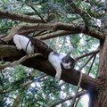 3日間立ち往生の猫を救助にきたはずが…!?