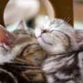 子猫をお風呂に入れる時のコツと注意点