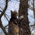 猫が『反応する音』6選!興味を引く音の特徴は?
