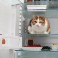 猫がごはんを食べない時の原因とは
