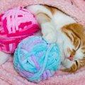 猫との幸せな時間を夢見るあなたへ…あらかじめ知っておくべき4つの事