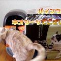 [朗報!]猫のシステムトイレの賢い使い方が判明!