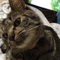 猫に『心を開いてもらえる人』に共通すること3つ