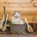 猫にシャンプーは必要?専用アイテムを使うべきおすすめの理由