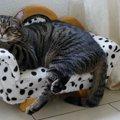 猫は飼い主のことを忘れることがある?忘れてしまう3つの理由とやる…
