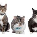 猫の性格は毛の色や模様で違う!?それぞれの特徴をご紹介!