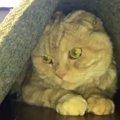 「突然お風呂に入れられた…」いじけてしまった猫さんが可愛すぎと話題♪