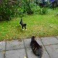 「絶対に頭上げにゃいでよ」計画的に猫が猫を飛び越える瞬間