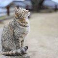 日本全国の猫島を一挙にご紹介!