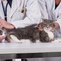 猫に熱がある時の対処法や原因
