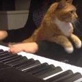 忙しそうニャね、僕がお手伝いするニャ!ピアノの演奏を邪魔(お手伝…