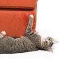 猫の爪が引っかかってしまった時の対処法