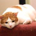 猫が大声で鳴くのは、分離不安症?