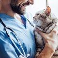猫の「自律神経系失調症」は治るの?症状と原因、対処法まで