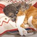 世界でイチバンふわふわな枕を手に入れた猫ちゃん♡