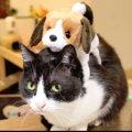 びっくり?怖い?動くぬいぐるみを見た猫さんたち
