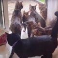 みんな仲良し♪ある日の朝の猫さんたち!
